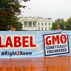 Stop Resisting Labels on GM Foods